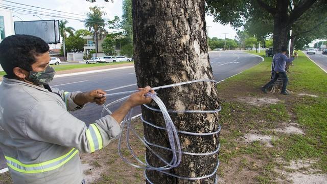 Tronco de árvores também serão iluminadas, na capital — Foto: Divulgação/Prefeitura de Palmas