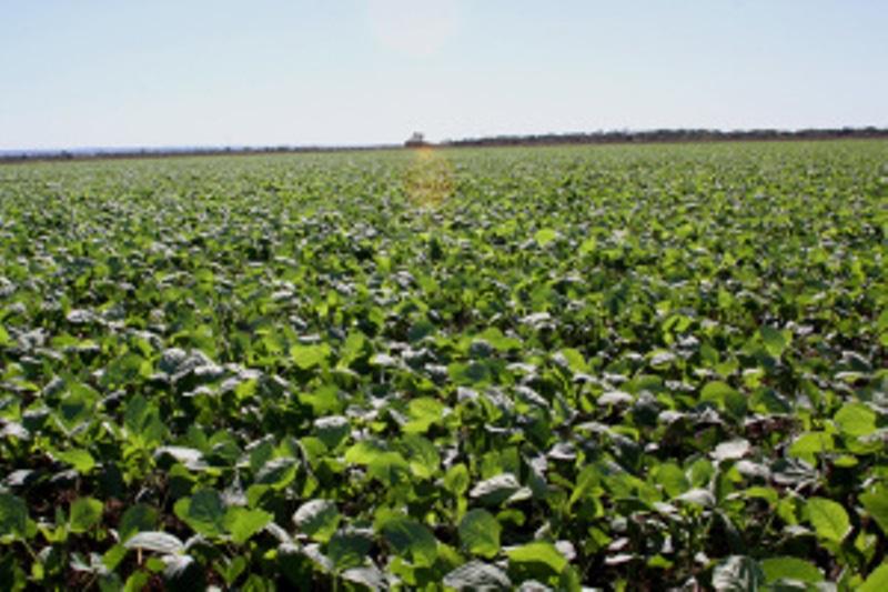 Plantio de soja nas várzeas tropicais é prorrogado por mais 15 dias