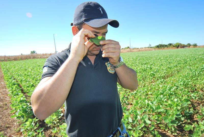 Controle da Ferrugem Asiática garante produtividade de soja no Tocantins